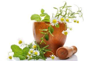 La phytothérapie pour mincir du ventre  les plantes pour maigrir, ça marche