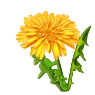 Une plante brule graisse efficace