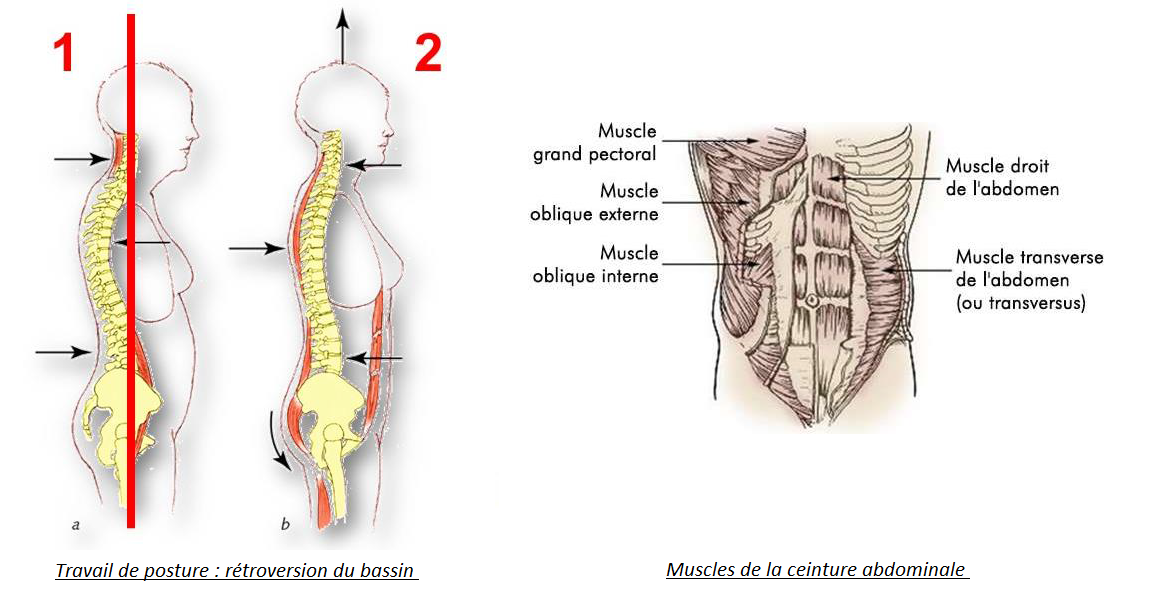 ceinture abdominale